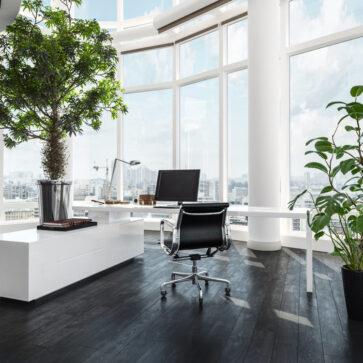 biofilia no seu ambiente de trabalho